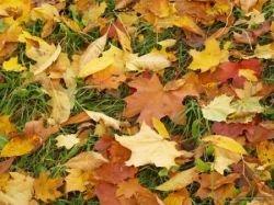 Встречаем золотую осень (фото)