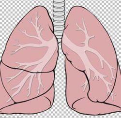 В мире растет число заболеваний легких