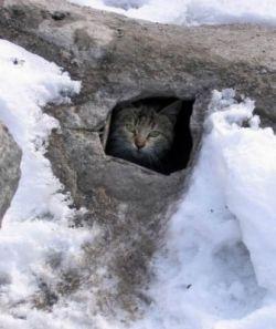 Кошачья жизнь Ближнего Востока (фото)