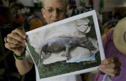 В США нашли труп легендарной чупакабры