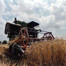 Москва может ввести запрет на вывоз пшеницы