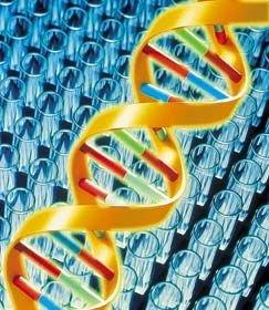 Найден первый ген, определяющий рост человека