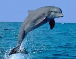 Дельфины на грани исчезновения