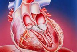 Лечение болезней сердца должно зависить от пола пациента