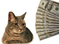 Кошачий киднеппинг: 20 тысяч долларов за жертву