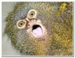 Самые странные и удивительные земные создания (фото)