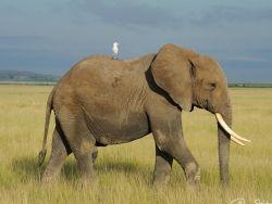 Розенбаум попросил у Полтавченко слона для зоопарка