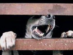"""Как власти Киева """"защищают"""" город от бродячих животных"""