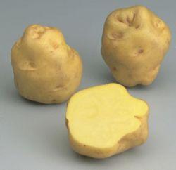 Где продают картошку по 500 евро/кг