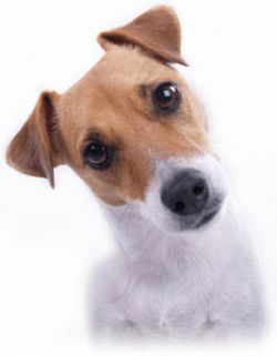Как собака может заменить шар для боулинга? (видео)