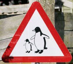 Для пингвинов сделали пешеходный переход (фото)