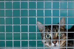 Кота поймали за употреблением кокаина