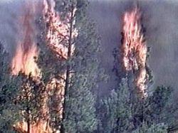 В Дербентском районе Дагестана разбушевался сильный лесной пожар