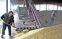 Зерно в России снова подешевеет, но хлеб – вряд ли