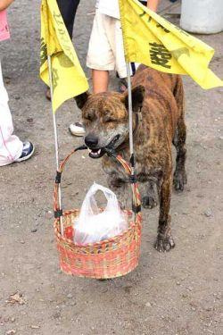 Тайваньские собаки занимаются торговлей (фото)