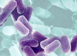 Бактерии могут затруднять развитие раковых опухолей