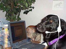 Собаки, которые общаются в Интернете (фото)