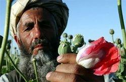 В 2007 году Афганистан поставит рекорд по производству героина – более 800 тонн