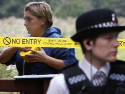 Британские власти подтвердили факт обнаружения нового очага заражения ящуром на юге страны