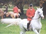 В Праге полиция пересядет на лошадей