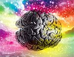 Политические пристрастия зависят от особенностей работы мозга