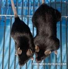 Генетически модифицированные мыши-качки (фото)