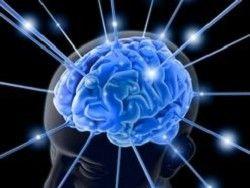 Мозг не вычислительная машина, а поисковая