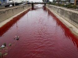 Китай. Мертвые свиньи наполнили реку