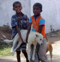 Полиция Шри-Ланки возьмет собак на службу напрокат