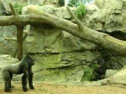 Талантливые обезьяны зарабатывают тысячи долларов