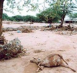 Десятки человек погибли от наводнений в восточной Африке