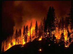 Пять тысяч человек эвакуированы в Калифорнии из-за лесного пожара