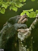 Где-то на белом свете: раскрыта тайна почесывания медведей о деревья