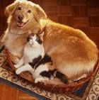 Как уживаются разные животные в доме