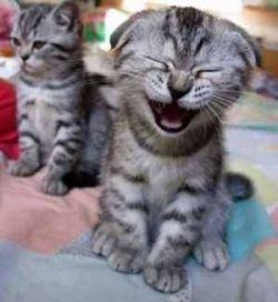 Позитивная подборка с кошками (фото)
