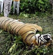 Ущерб от браконьерства будут рассчитывать по новой методике