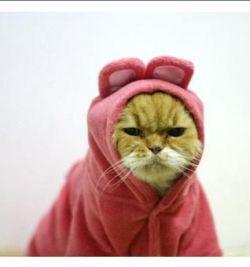 Модные тенденции осени для вашей любимой кошки (фото)