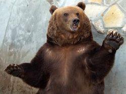 В Румынии безумный медведь с ведром ворвался в психбольницу