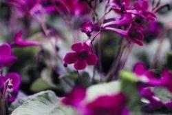Растения для дачи и квартиры