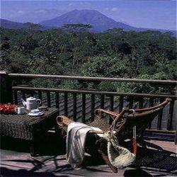 Плантации кофе превратились в экзотические курорты