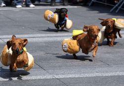 Собачий «забег победителей» в костюмах (фото)
