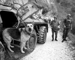 Тбилиси утверждает, что захваченные в плен абхазские военные готовили теракты