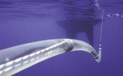 Google проложит кабель по дну Тихого океана
