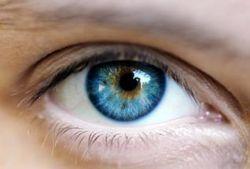 Медики выяснили механизм регенерации зрения