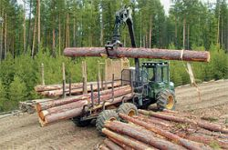 Федеральные чиновники решили бороться с автомобильными пробками вырубкой леса