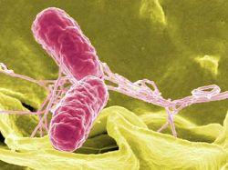 Бактерии становятся в три раза опаснее после путешествия в космос