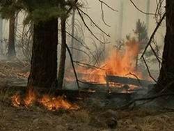 В Сибири горят сотни гектаров леса