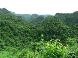 Во Вьетнаме обнаружены ранее неизвестные растения и животные
