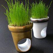 Созданы перстни с живыми газонами