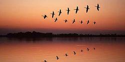 Перелетные птицы воспринимают магнитное поле Земли визуально